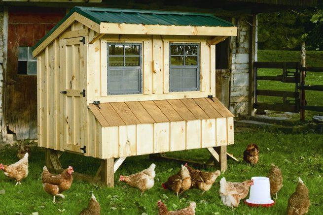 portable animal shelters for chickens
