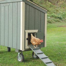 chicken ramp 384x384